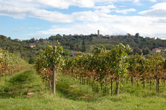Winnice w Montecarlo