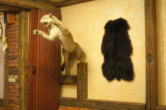 wypchany kot